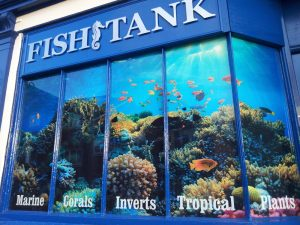 Fish Tank – Window Graphics Rugby